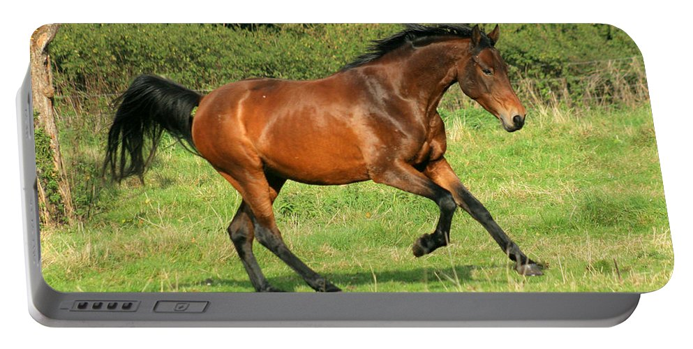 Horse Portable Battery Charger featuring the photograph Run Run by Angel Ciesniarska