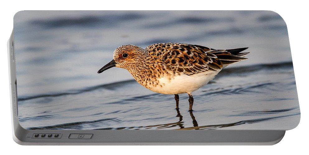 Doug Lloyd Portable Battery Charger featuring the photograph Sanderling by Doug Lloyd