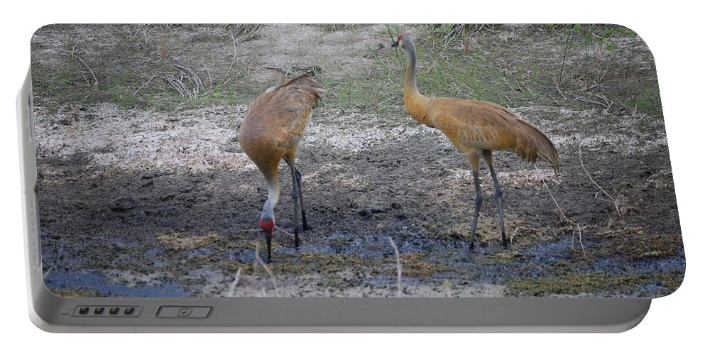 Feeding Portable Battery Charger featuring the photograph Sandhill Stork by Robert Floyd