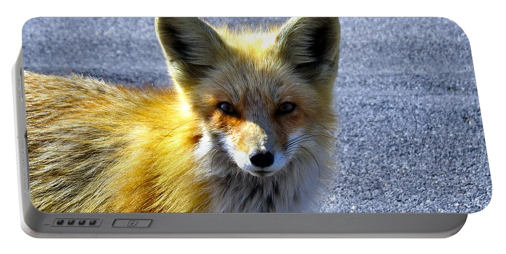 Fox Portable Battery Charger featuring the photograph Say What Human? by Art Dingo