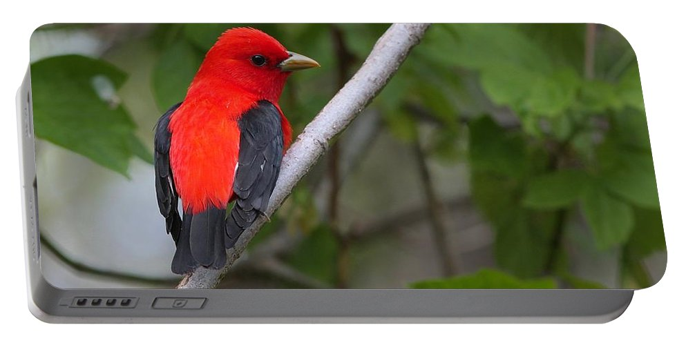 Bird Portable Battery Charger featuring the photograph Scarlet Tanager by Charles Owens