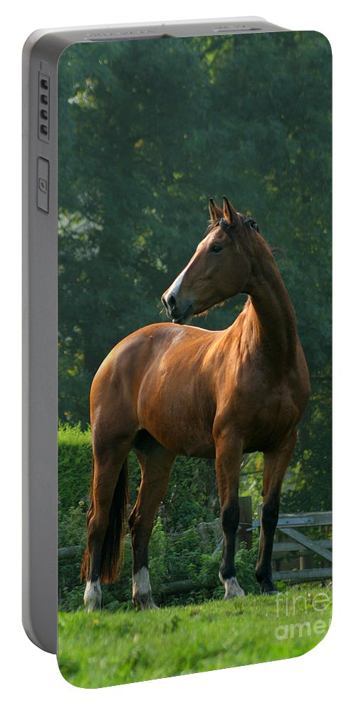 Horse Portable Battery Charger featuring the photograph Sentinel by Angel Ciesniarska