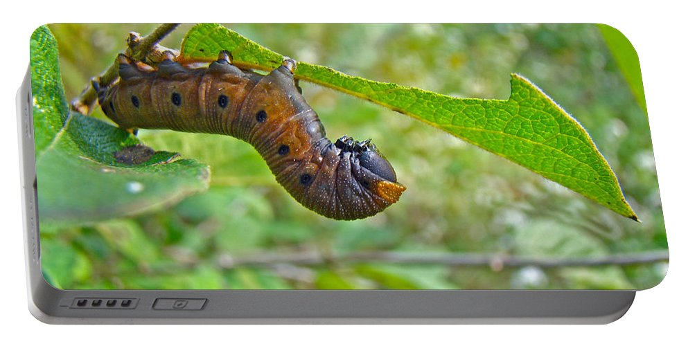 Caterpillar Portable Battery Charger featuring the photograph Snowberry Clearwing Hawk Moth Caterpillar - Hemaris Diffinis by Mother Nature