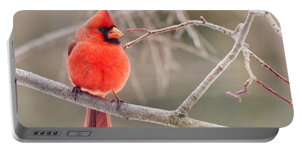 Portable Battery Charger featuring the photograph Splash Of Red by Cheryl Baxter