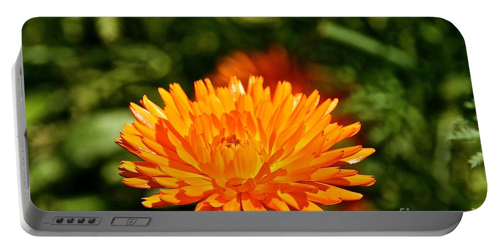 Flower Portable Battery Charger featuring the photograph Spring Fresh by Susan Herber