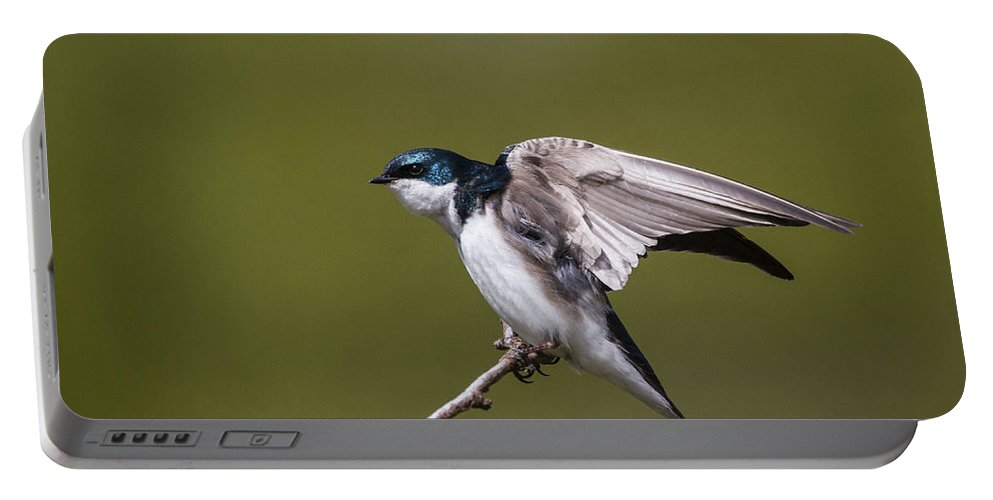 Doug Lloyd Portable Battery Charger featuring the photograph Stretch by Doug Lloyd