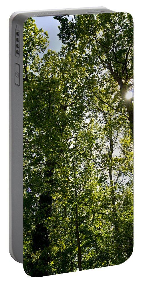 Tree Portable Battery Charger featuring the photograph Summer Trees by David Pyatt