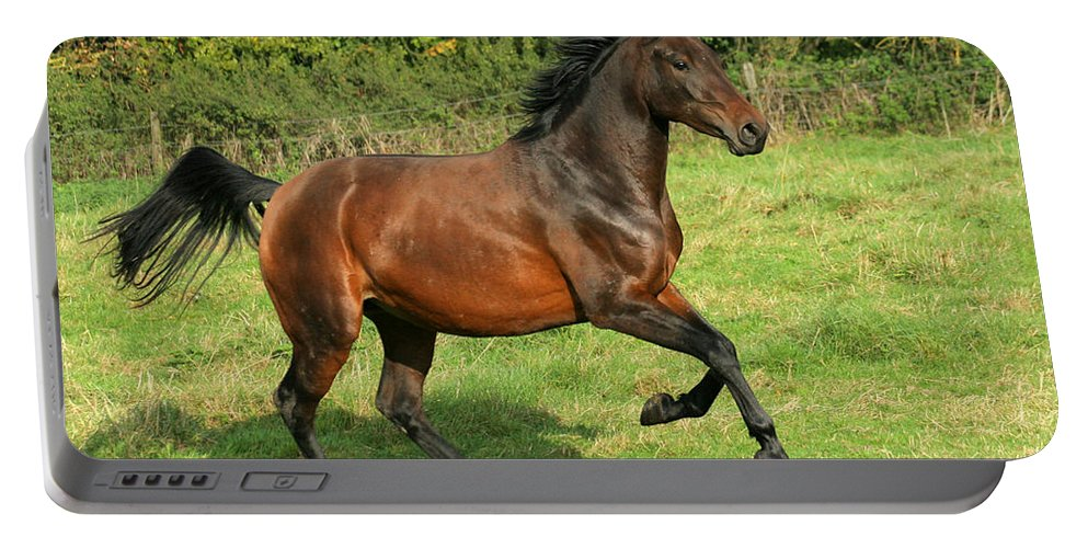 Horse Portable Battery Charger featuring the photograph Take-off by Angel Ciesniarska