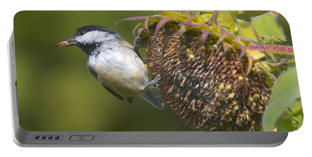 Black-capped Chickadee Portable Battery Charger featuring the photograph Tasty Treat by Sharon Talson