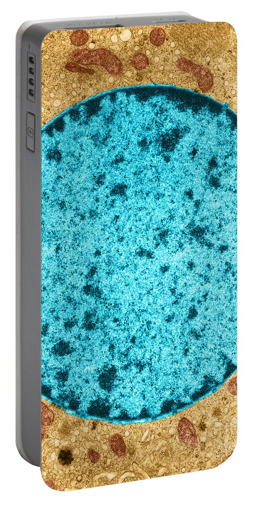 Histology Portable Battery Charger featuring the photograph Tem Of Leydig Cell by David M. Phillips