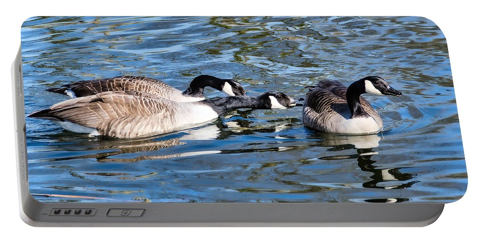 Birds Portable Battery Charger featuring the photograph Three's A Crowd by Susie Peek
