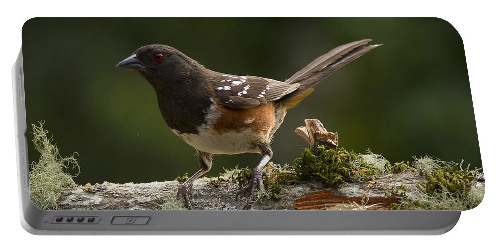 Bird Portable Battery Charger featuring the photograph Towhee by Jean Noren