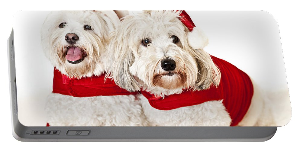 Dogs Portable Battery Charger featuring the photograph Two Cute Dogs In Santa Outfits by Elena Elisseeva