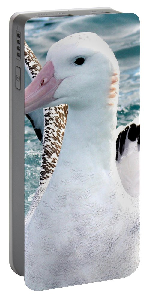 Wandering Albatross Portable Battery Charger featuring the photograph Wandering Albatross by Amanda Stadther