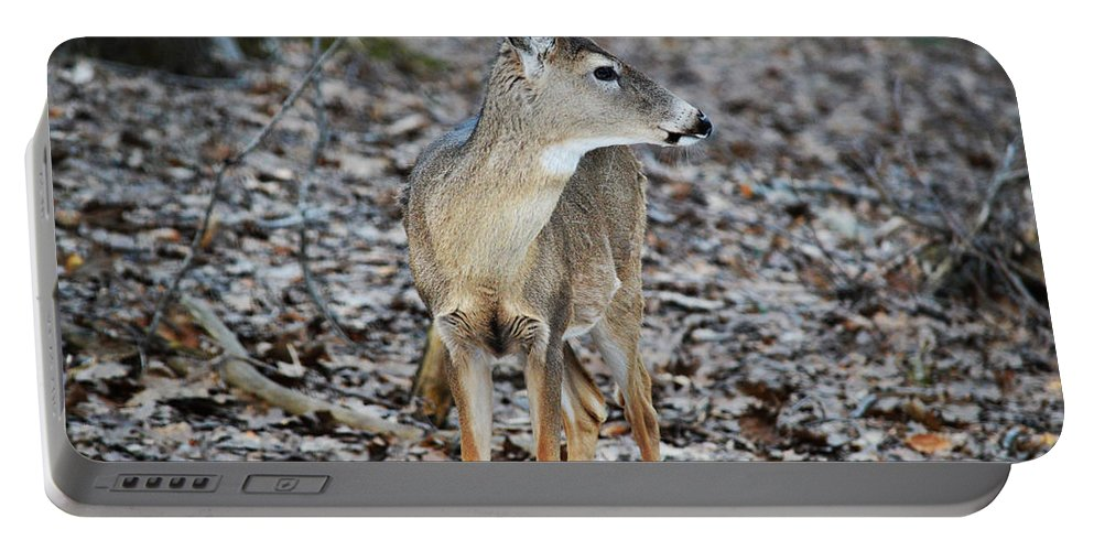 Whitetail Portable Battery Charger featuring the photograph What Was That by Linda Kerkau