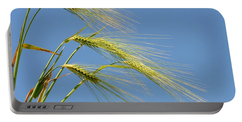 Agriculture Portable Battery Charger featuring the photograph Wheat by TouTouke A Y