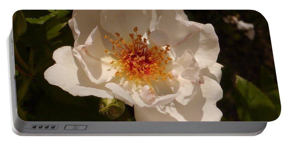 White Rose Portable Battery Charger featuring the photograph White Rose by Christiane Schulze Art And Photography