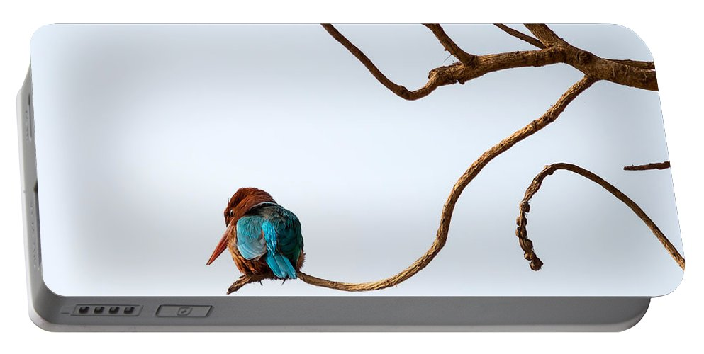 Smyrna Kingfisher Portable Battery Charger featuring the photograph White-throated Kingfisher by Gaurav Singh