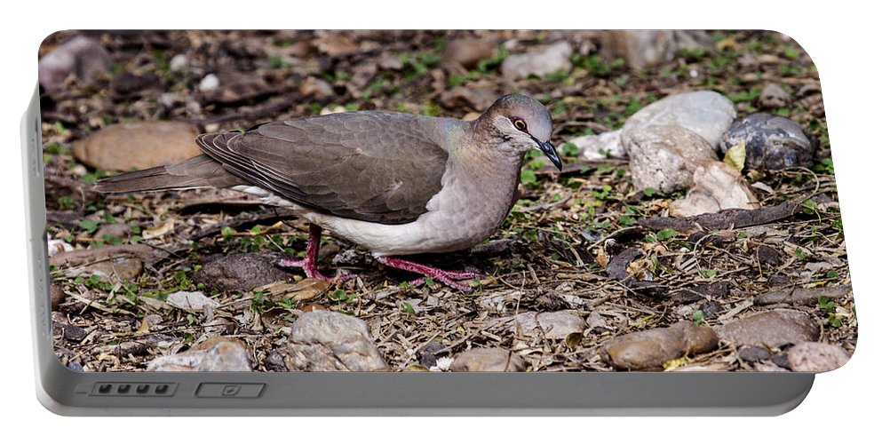 Doug Lloyd Portable Battery Charger featuring the photograph Whitetipped Dove by Doug Lloyd