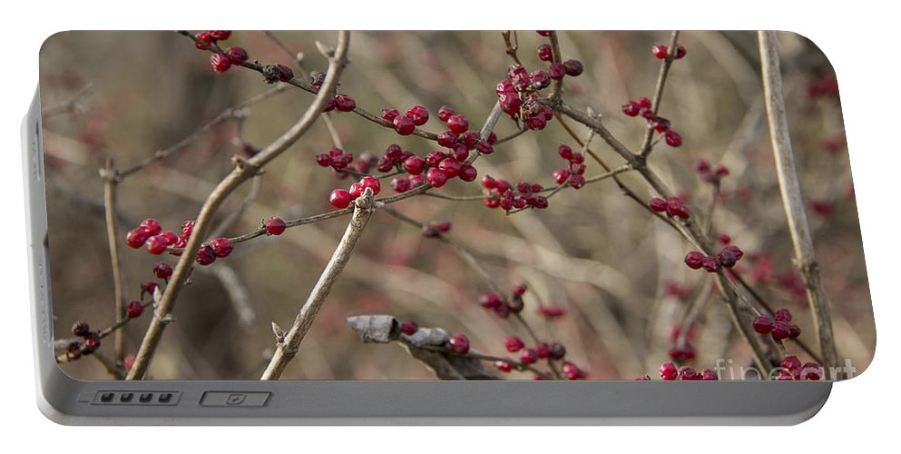 Winterberry Portable Battery Charger featuring the photograph Winterberries by Teresa Mucha