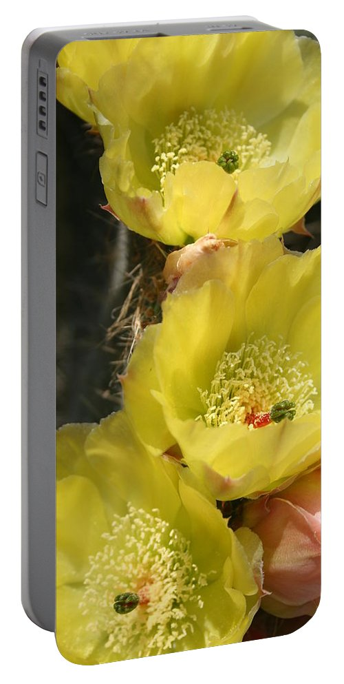 Cactus Portable Battery Charger featuring the photograph Yellow Cactus by Christiane Schulze Art And Photography