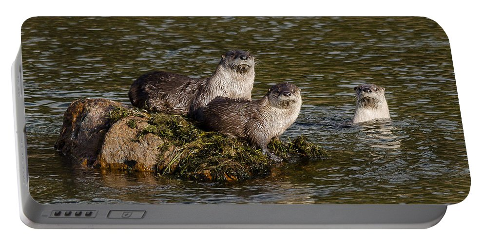 Otters Portable Battery Charger featuring the photograph Yellowstone Otters by Yeates Photography