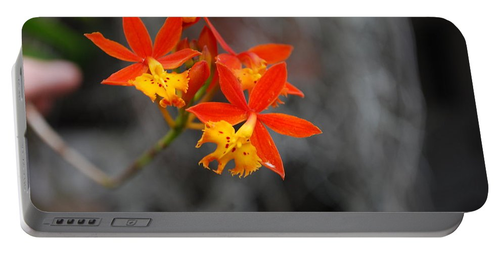 Circus Portable Battery Charger featuring the photograph Orchid by Robert Floyd