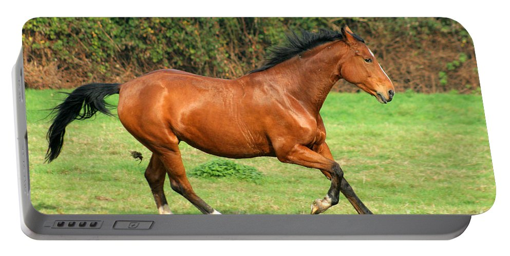 Horse Portable Battery Charger featuring the photograph The Bay Horse by Angel Ciesniarska