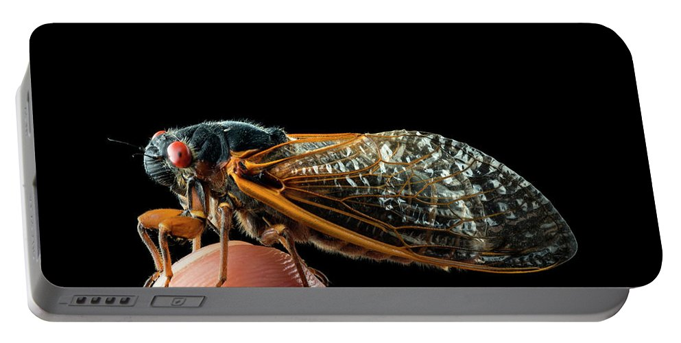 Backgrounds Portable Battery Charger featuring the photograph A Detailed View Of A Brood II Cicada by Karsten Moran