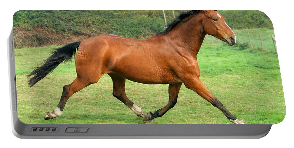 Grey Horse Portable Battery Charger featuring the photograph The Bay Horse by Angel Ciesniarska