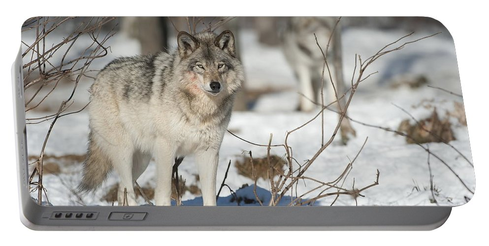 Timber Wolf Photography Portable Battery Charger featuring the photograph Timber Wolf Pictures by Wolves Only