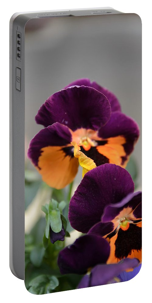 Art Portable Battery Charger featuring the photograph Viola Tricolor Heartsease by Michael Goyberg
