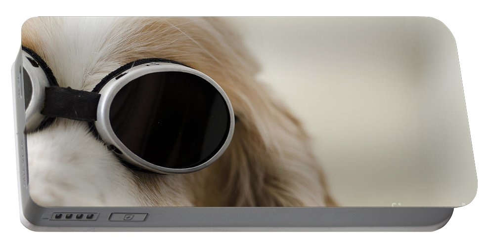 Dog Portable Battery Charger featuring the photograph Dog by Mats Silvan