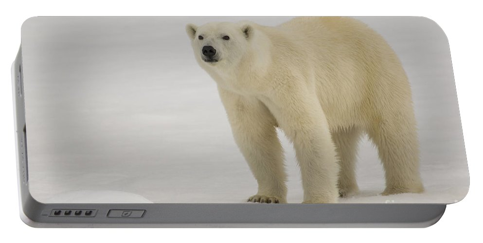 Polar Bear Cub Portable Battery Charger featuring the photograph Polar Bear Walking On Ice by John Shaw