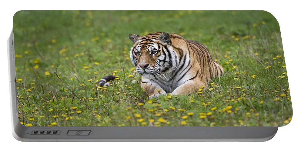 Asia Portable Battery Charger featuring the photograph Siberian Tiger, China by John Shaw