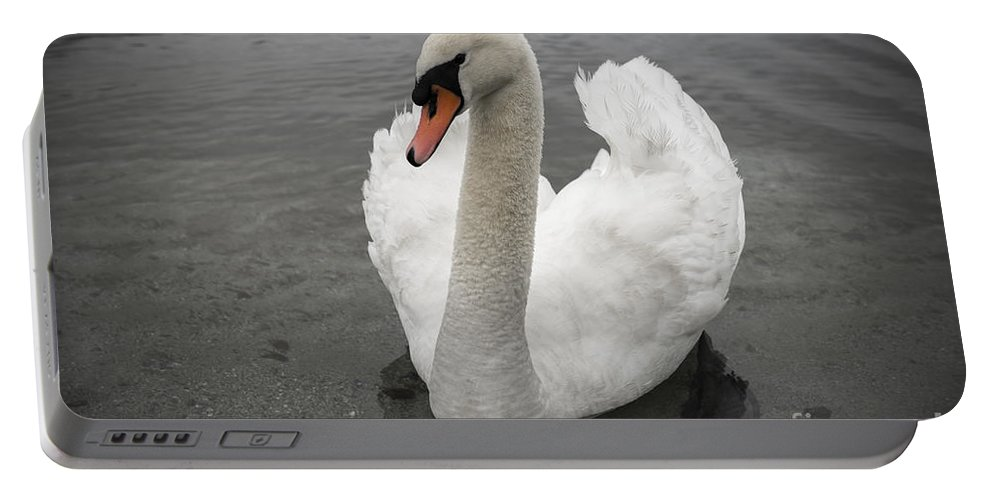 Swan Portable Battery Charger featuring the photograph Swan by Mats Silvan