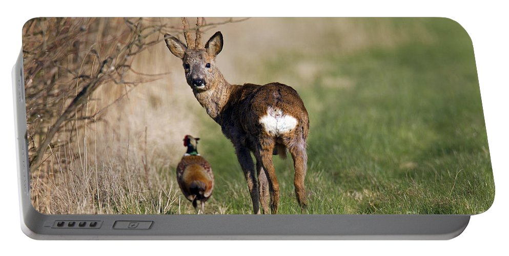 Common Pheasant Portable Battery Charger featuring the photograph 130201p187 by Arterra Picture Library