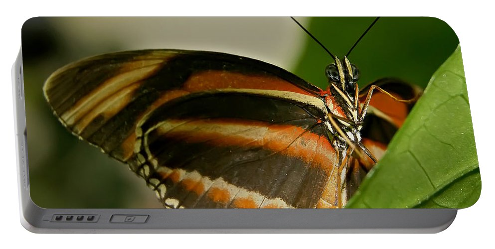Butterfly Portable Battery Charger featuring the photograph Butterfly by Olga Hamilton