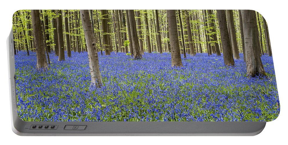 Bluebells Portable Battery Charger featuring the photograph 140420p006 by Arterra Picture Library