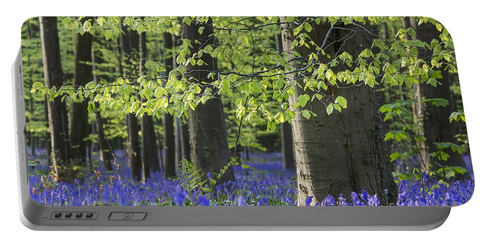 Bluebells Portable Battery Charger featuring the photograph 140420p060 by Arterra Picture Library