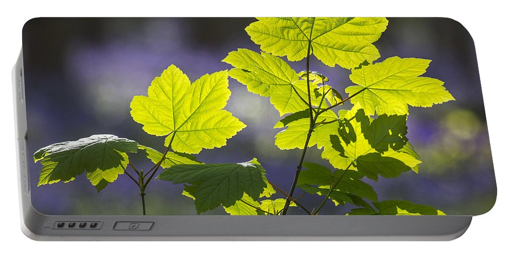 Sycamore Maple Portable Battery Charger featuring the photograph 140420p102 by Arterra Picture Library
