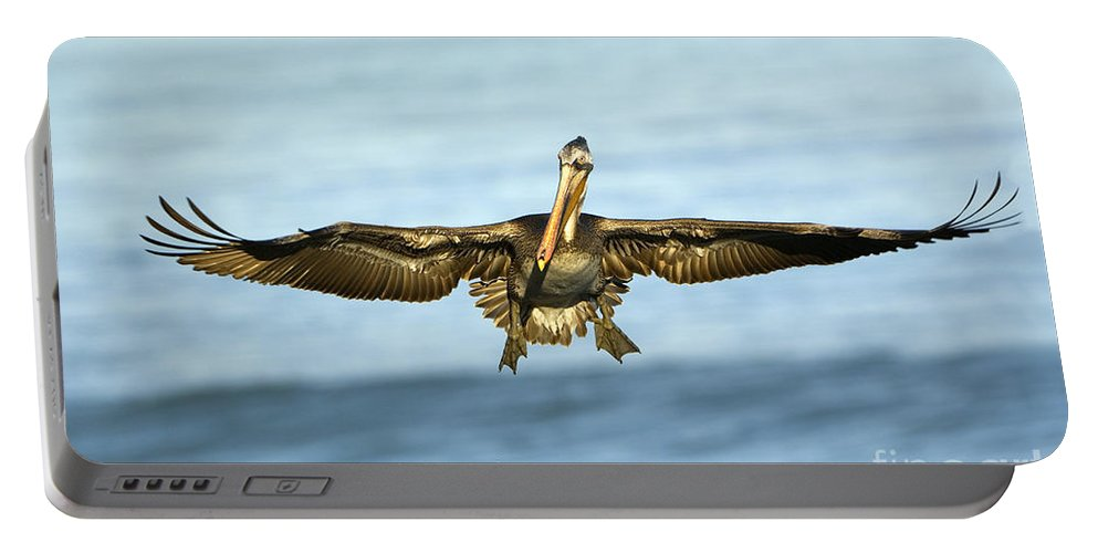 Brown Pelican Portable Battery Charger featuring the photograph Brown Pelican by John Shaw