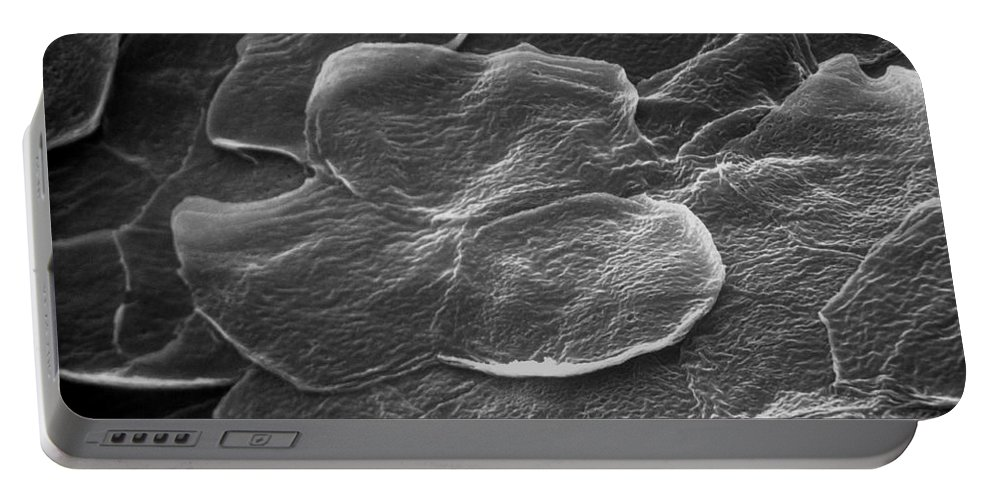 Sem Portable Battery Charger featuring the photograph Sem Of Human Skin by David M. Phillips