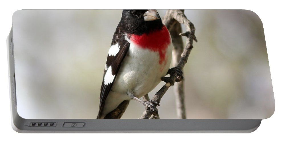 Rose Breasted Grosbeak Portable Battery Charger featuring the photograph Rose Breasted Grosbeak by Lori Tordsen