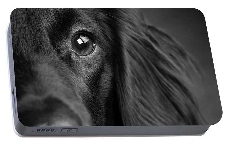 Photography Portable Battery Charger featuring the photograph Portrait Of A Mixed Dog by Animal Images