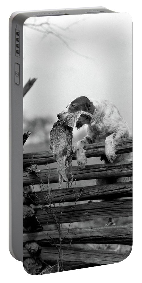 Photography Portable Battery Charger featuring the photograph 1920s English Setter Dog Climbing by Animal Images