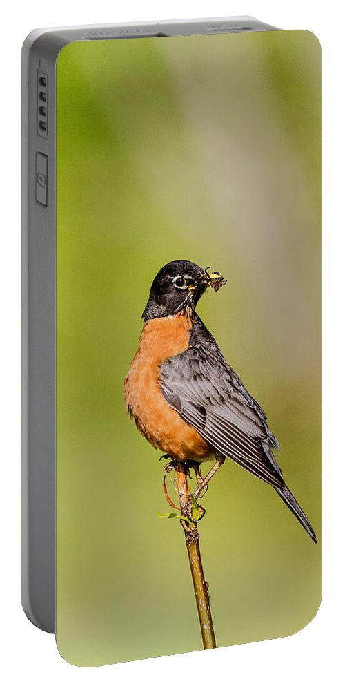 Doug Lloyd Portable Battery Charger featuring the photograph American Robin by Doug Lloyd