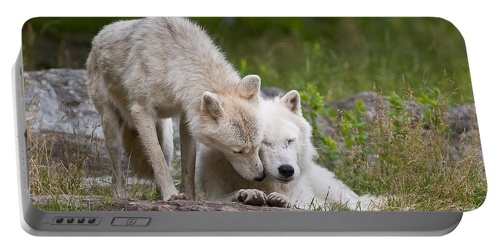 Arctic Wolf Photography Portable Battery Charger featuring the photograph Arctic Wolves by Wolves Only