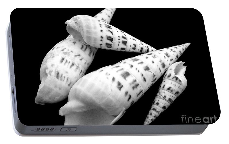 Sea Shell Portable Battery Charger featuring the photograph Augers by Mary Deal