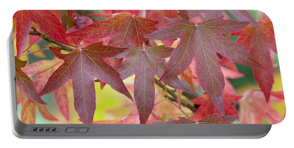 Liquidambar Portable Battery Charger featuring the photograph Autumnal Liquidambar Leaves by Lee Avison
